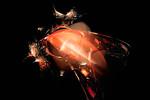 Strange Orange Lice 16.58